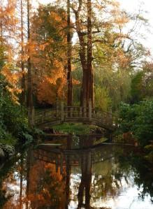 Metasequoia glyptostroboides either side of the Japanese Bridge, courtesy of Manuel Modoni