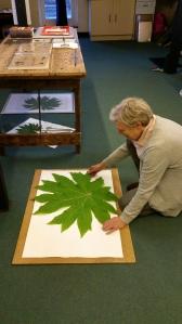 Anne preparing a giant Tetrapanax leaf in her Winterbourne studio