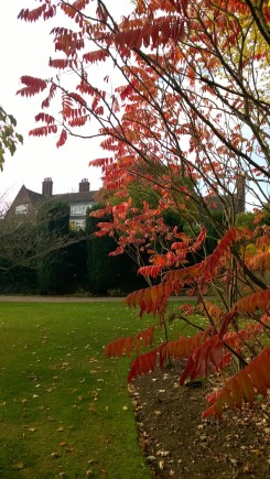 Rhus typhina in the Geographical Beds