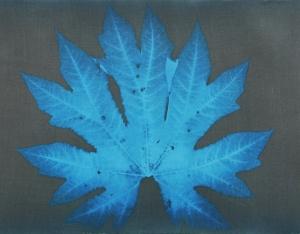 Tetrapanax papyrifer 'Rex', cyanotype, Anne Parouty, 2015