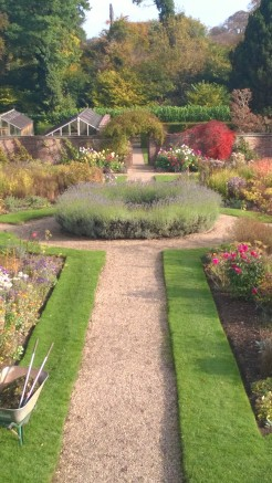Lavender, Japanese maples and Dahlias, in the Walled Garden