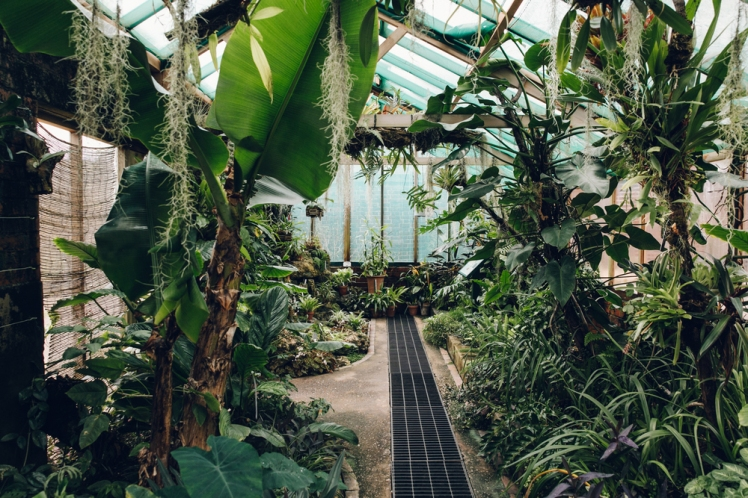 Gilbert Orchid House, Winterbourne House and Garden photograph by Haarkon