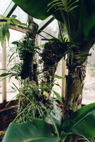 Gilbert Orchid House, Winterbourne House and Garden, Digging for Dirt, photograph by Haarkon