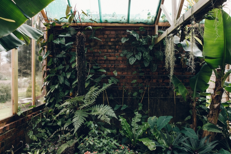 Gilbert Orchid House, photograph by Haarkon