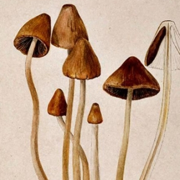 Beatrix Potter, Mycology, Winterbourne House and Garden, Digging for Dirt