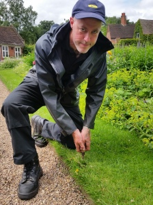 Rumours of a dandelion spotted at Winterbourne were quickly quashed, Winterbourne House and Garden, Digging for Dirt
