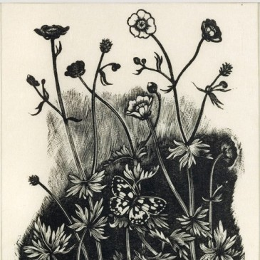 John Nash, Common Buttercup, Gold Knots, Upright Crowfoot, Winterbourne House and Garden, Digging for Dirt