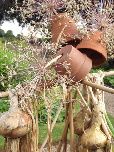 Allium in the Walled Garden, Winterbourne House and Garden, Digging for Dirt