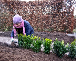 Planting box, Winterbourne House and Garden, Digging for Dirt