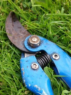 Secateurs, photograph by Leighanne Keasey, Winterbourne House and Garden, Digging for Dirt