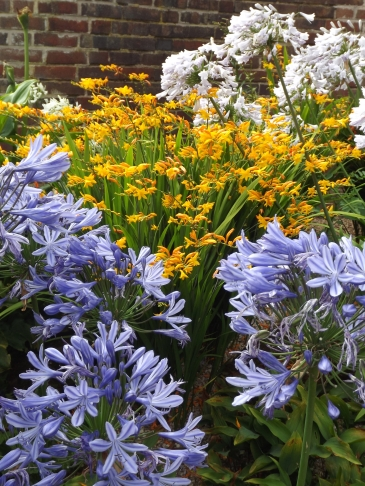 Agapanthus and Crocosmia, Winterbourne House and Garden, Digging for Dirt