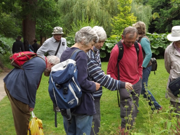 Birmingham and Black Country Botanical Society and Warwickshire Flora Group, Winterbourne House and Garden Digging for Dirt