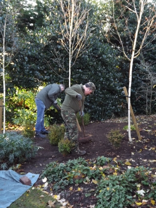 Students from Birmingham Metropolitan College help to plant box plants in the Winter Garden, Winterbourne House and Garden, Digging for Dirt