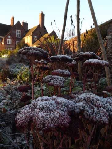 Sedum 'Herbstfreude', Winterbourne House and Garden, Digging for Dirt