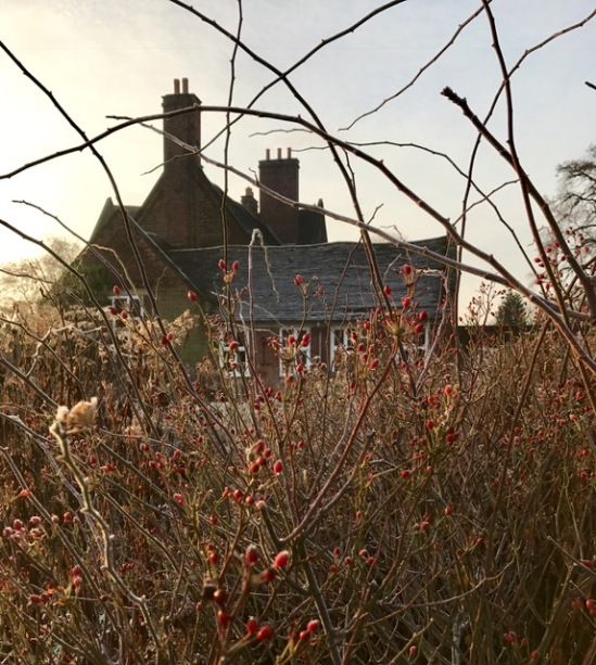 Rose hips in the Walled Garden, photograph by Marie Belfort, Winterbourne House and Garden, Digging for Dirt